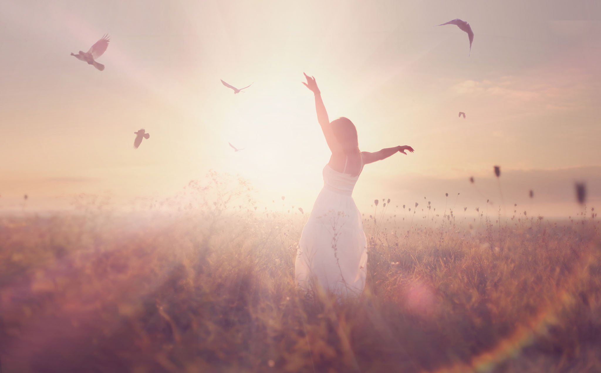 silhouette of a young girl in a field, at sunrise with flying birds in the sky